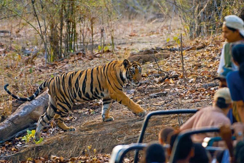 Visiter la parc national de bandhavgarh