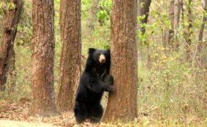 Guide de Voyage pour Visiter le Parc national de Kanha