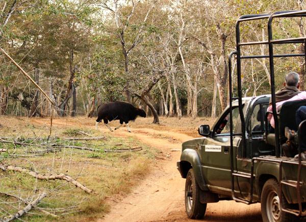 Visite au Parc national de Nagarhole