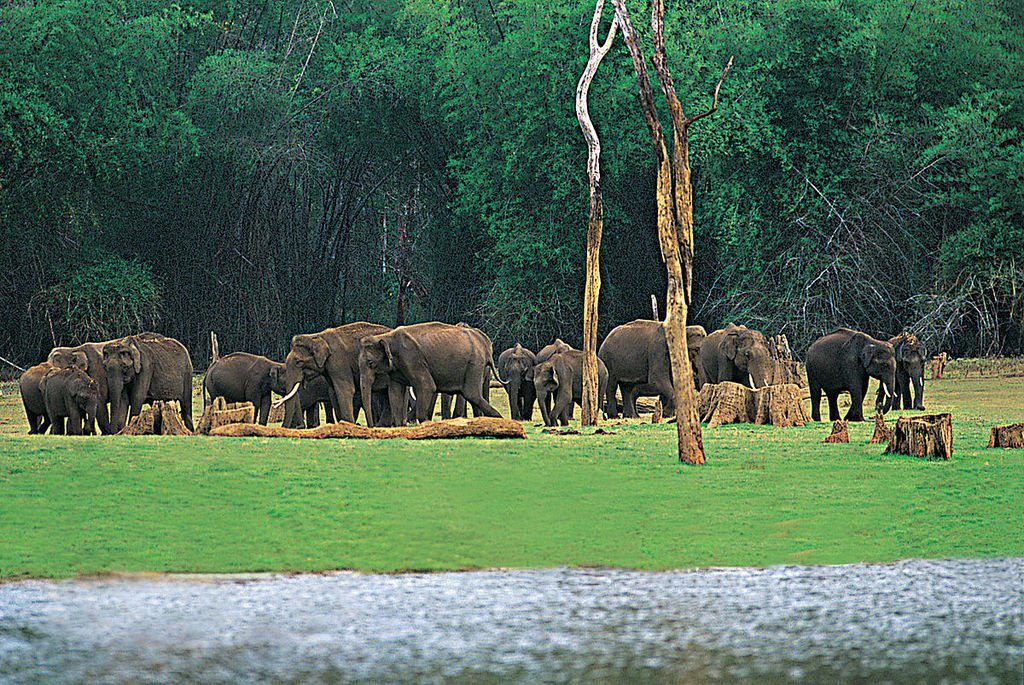 Des éléphants repérés lors d'une promenade en bateau sur le lac Periyar