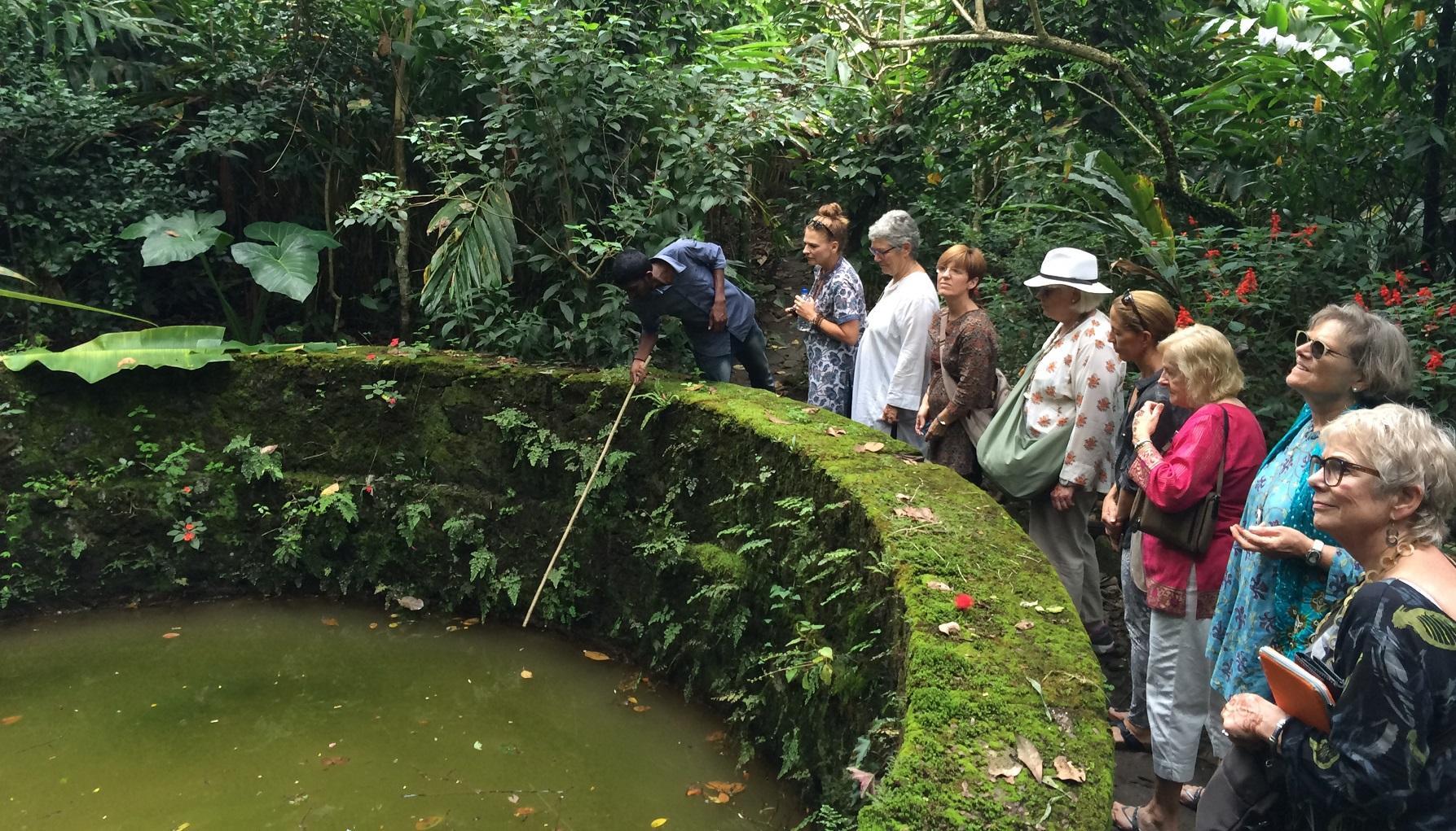 Jardins d'épices et plantations de thé !