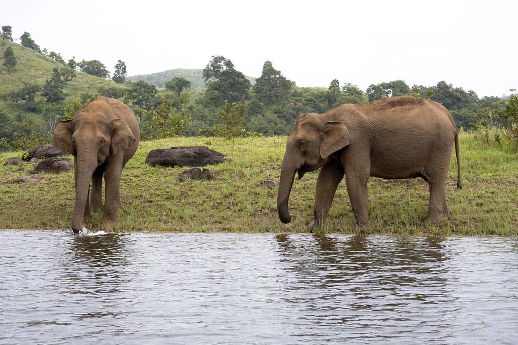 Observation d'éléphants lors d'une promenade en bateau au lac Periyar