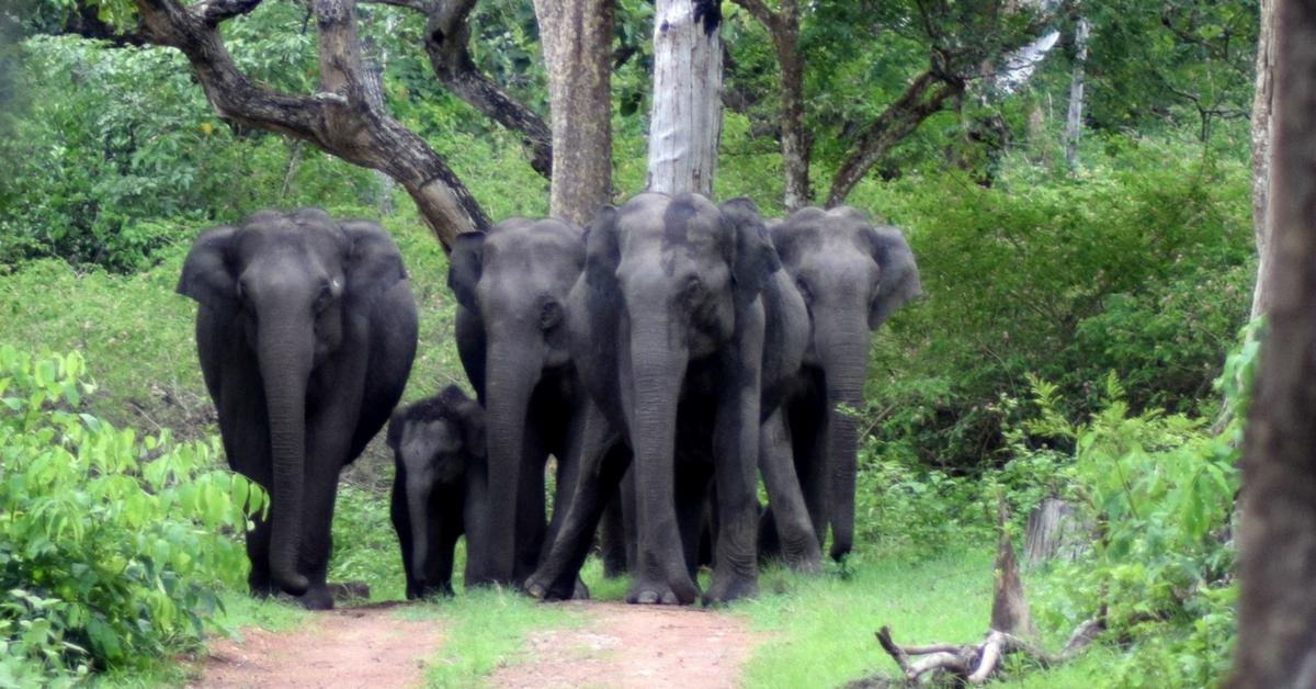 Visite au Parc National de Bandipur