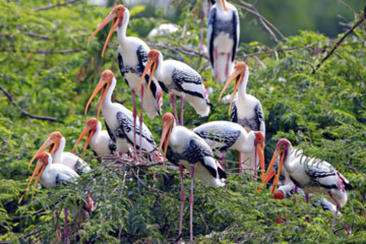 Sanctuaire d'oiseaux dans le Rajasthan