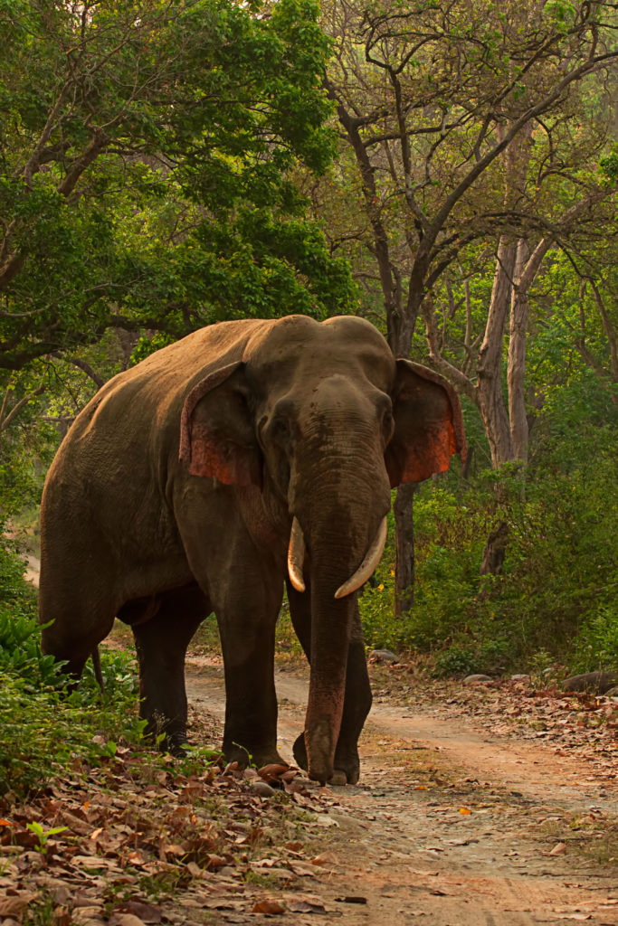 Visiter le Parc national de Jim Corbett