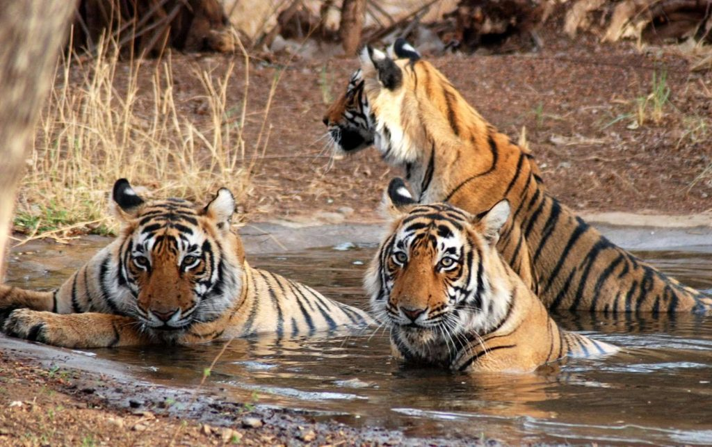 Visiter le Parc national Jim Corbett