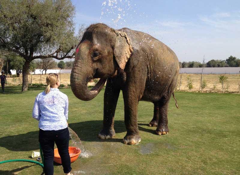 L'expérience des éléphants à Jaipur