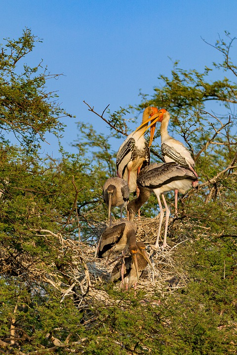 Visiter le sanctuaire des oiseaux de Bharatpur