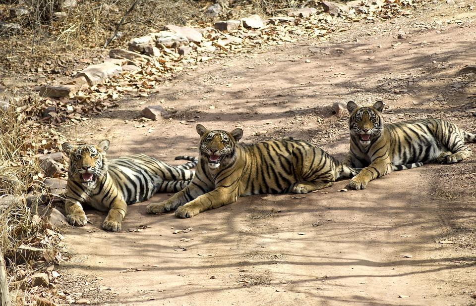 Parc national de Satpura