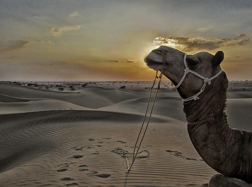 dunes à jaisalmer