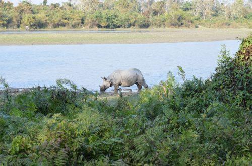 Visiter le Parc national de Kaziranga